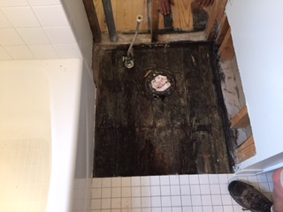 mold under toilet.jpg (320 × 240 px, 31 kB)